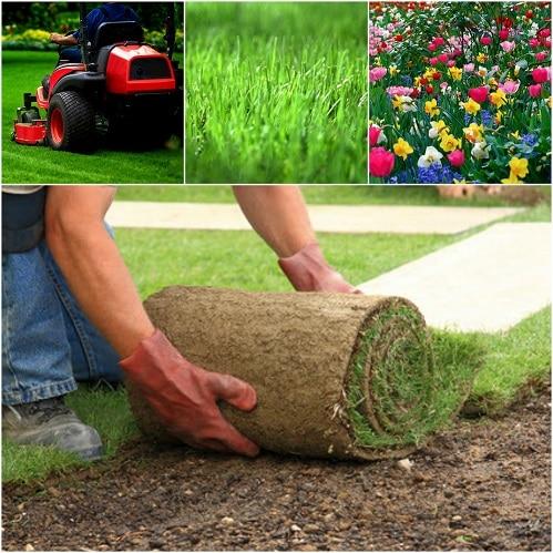 fertilizing grass in Chicago